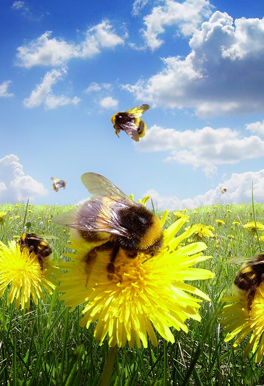 bees in field