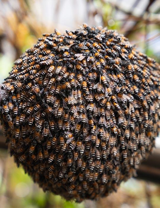 Kyle Bee Hive