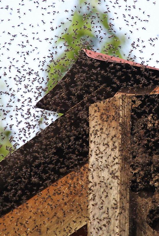 bees on door post