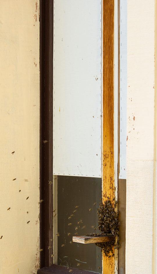bees on wood
